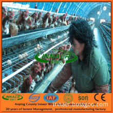 All Kinds of Chicken Layer Cages (Hot selling!)