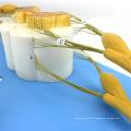 VERTEBRA13 (12397) Medical Science Human Spinal Cord with Nerve Branches Medical Skeleton Model