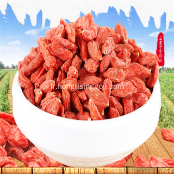 Fruit de Goji Super Wlofberry