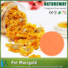 High quality chrysanthemum indicum extract powder,chrysanthemum extract