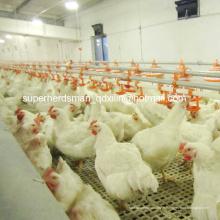 Équipement de hangar de contrôle d'éleveur de haute qualité