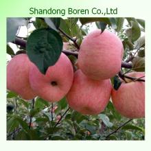 Купить Яблоки оптом из Китая