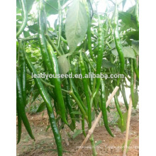 MP041 Hongshou high quality hybrid red pepper seeds for cultivating