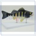 PNT-0829 high quality plastic animal skulls for sale OEM