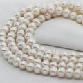 12mm Riesige große natürliche Süßwasser-Elfenbein-Perlen-Schnur