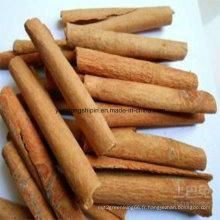 Pressé dans 25kg Carton Cassia Cinnamon