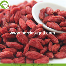 Venda por atacado Sweet Pesticide Dry Goji Berry