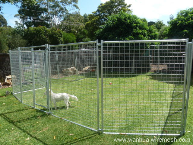 Chain link boxed dog run dog kennel
