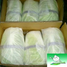 Fresh Chinese Cabbage with packing box