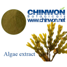 Extrait de Fucus d'Algues Marron Émovedes et Peau
