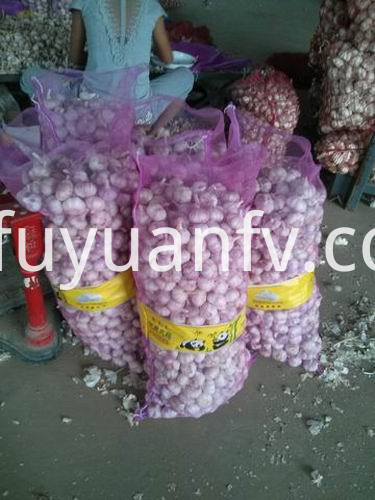 fresh garlic to Sri lanka