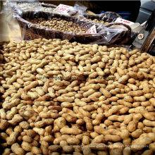 Roasted Peanut Inshell 9/11, 11/13