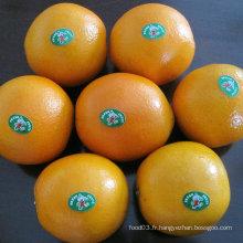 Bonne qualité Orange Frais chinois Orange