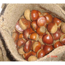 Sweet chestnuts of Chinese nuts