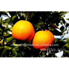 Doce e suculenta laranja fresca