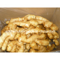Fresh Ginger (150g & up)