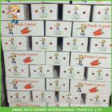 Neue Ernte Frische Karotte 8Kg Für Kuwait Markt