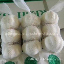2014 New Crop Pure White Garlic