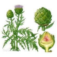 Hot Sale Factory Directly Supply Competitive Price100% Natural Artichoke Leaf Extract Minimum Order 1kg