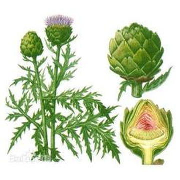 Venta caliente Fábrica Suministro directo Competitivo Price100 Natural extracto de hoja de alcachofa Pedido mínimo 1 kg