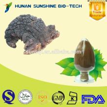 Extracto de hongo Chaga de alta calidad en polvo 1% -10% Triterpeno