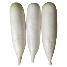 2014 New Crop for Sale Fresh White Radish