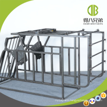 Swine Gestation Stall for Pigs Can Enter and Leave Freely After Eating