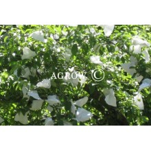 Apple Orchard Growing Bags