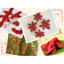 Ningxia Wolfberry secado Goji Berry