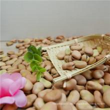 Venta caliente Nuevos cultivos de habas