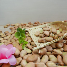 Vente chaude Nouvelles cultures de fèves