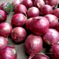 ampoule au prix le plus bas oignon rouge frais et oignon jaune