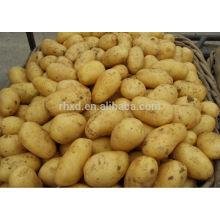 2014 Новый Свежий Урожай Сладкого Картофеля Голландия Картофель