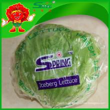 NEU 2015 Yunnan Bio-Eisbergsalat
