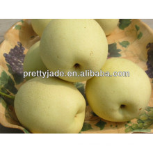 fresh Ya pear supplier