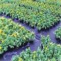 Tissu tissé d'agriculture de PP / tissu de paysage