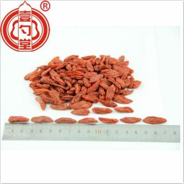 Healthy Goji Berries Red Dried Fruits