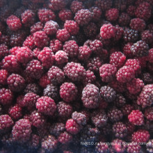 Zl-1046 Anic Blackberry Zl-1046 24