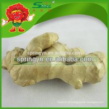 Gengibre e alho exportação empresa China gengibre exportador Chinês madura super gengibre