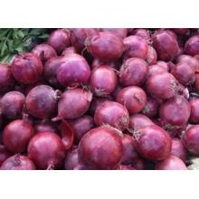 Fournir l'oignon rouge frais avec le plus bas prix de bonne qualité