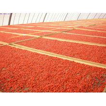 Bulk Goji Beeren stammen aus Ningxia