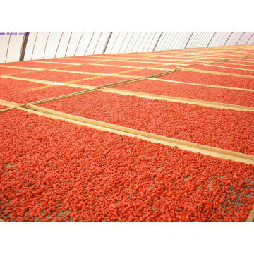 Bulk Goji Berries Originated From Ningxia