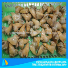 cheap frozen perfect superior whelk meat with best exporter
