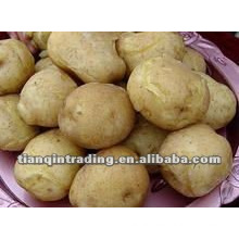chinese fresh potato for sale