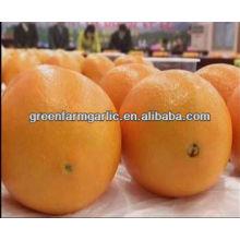 Meilleur mandarine en Chine