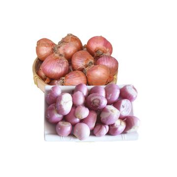 New crop wholesale fresh shallot
