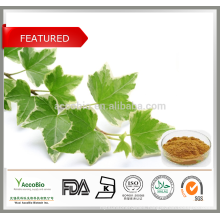 High Quality 100% Natural 10% Hederacoside C HPLC Ivy Extract Powder
