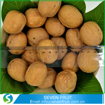 Dried Style and Food Use whole walnuts in shell