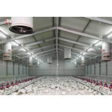 Maison de volaille, ferme de poulet (PCH-11)