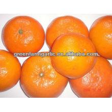 Deliciosa mandarina 2013 para el mercado internacional